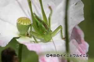 Kurihama001_1